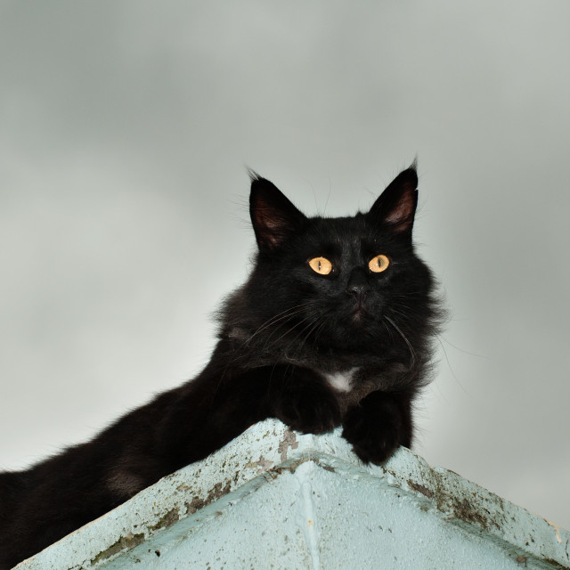 """""""The Lookout"""" stock image"""