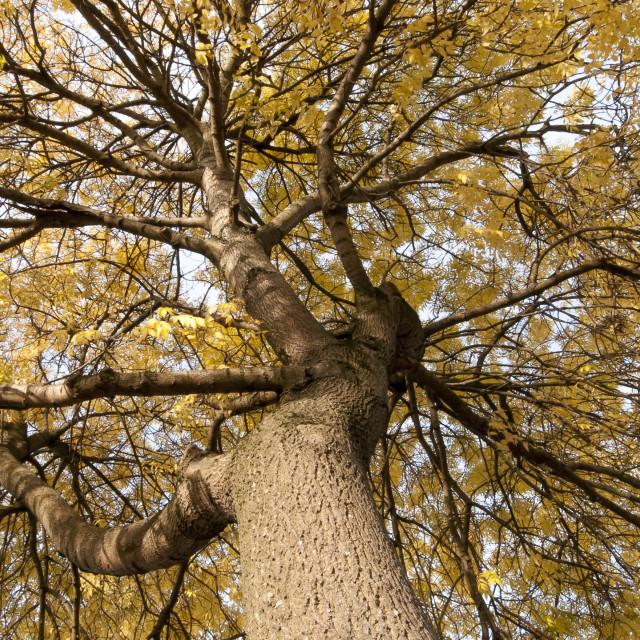 """""""An Autumn Tree"""" stock image"""