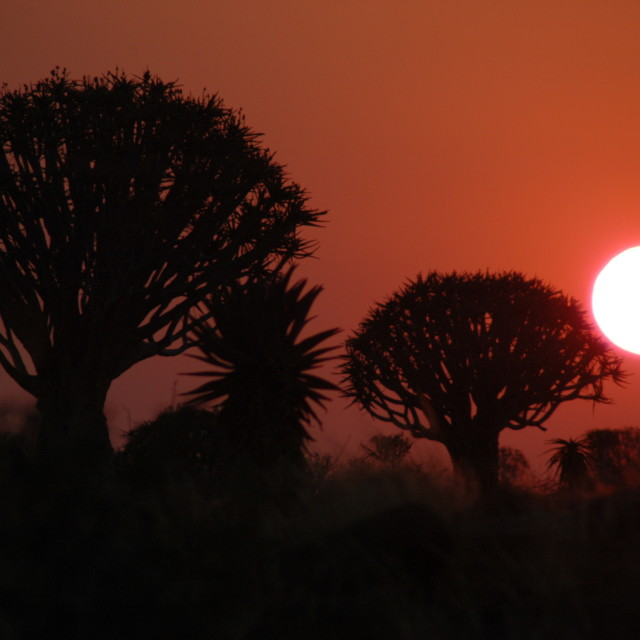 """Quiver African sunset"" stock image"