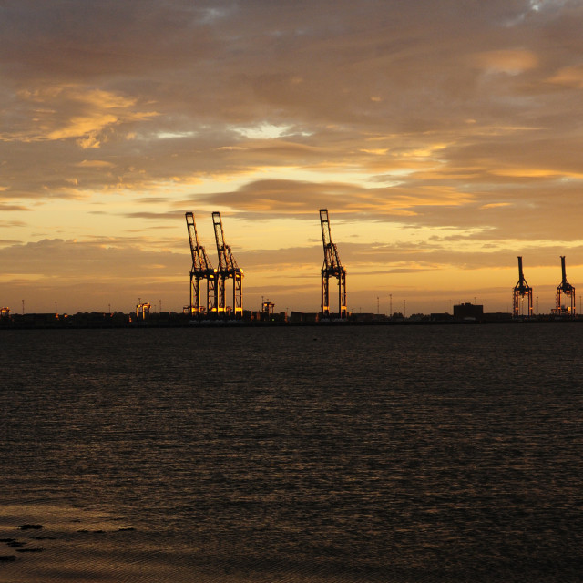 """Cranes at Sunrise"" stock image"