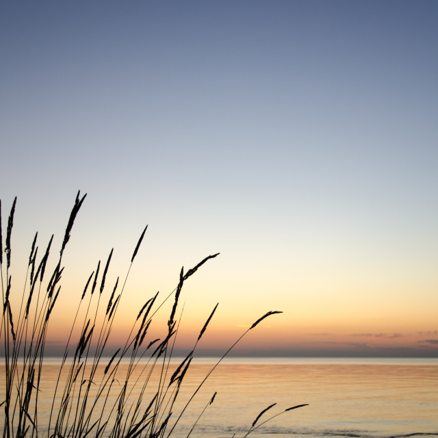 """""""Straw silhouettes at sunset"""" stock image"""