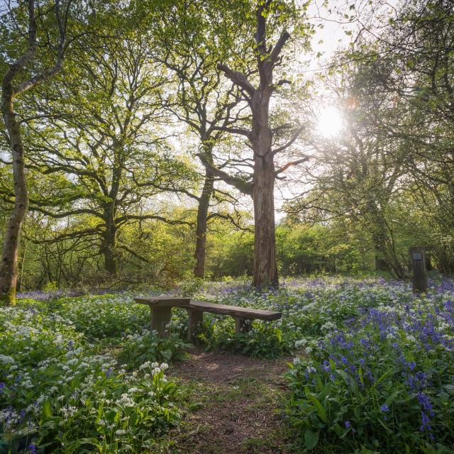 """Bluebells - Garston Wood"" stock image"