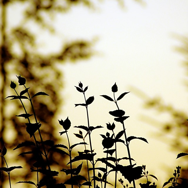 """""""Flower silhouettes"""" stock image"""