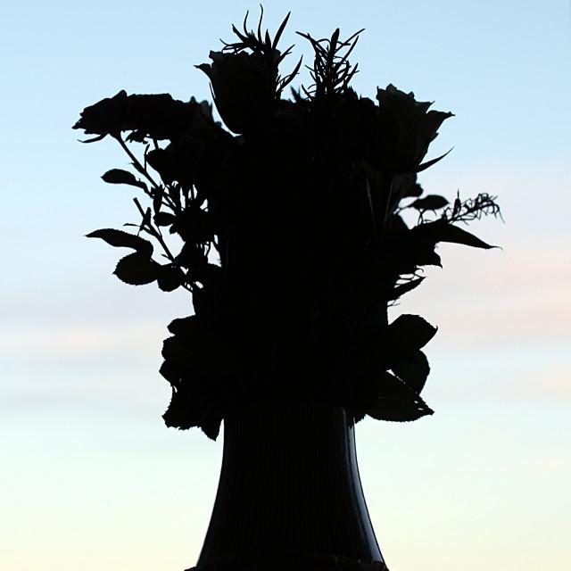 """Decorative flower vase silhouette"" stock image"