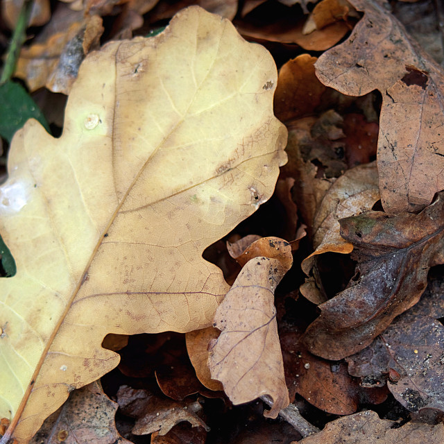"""""""Autumn Forest Leaves"""" stock image"""