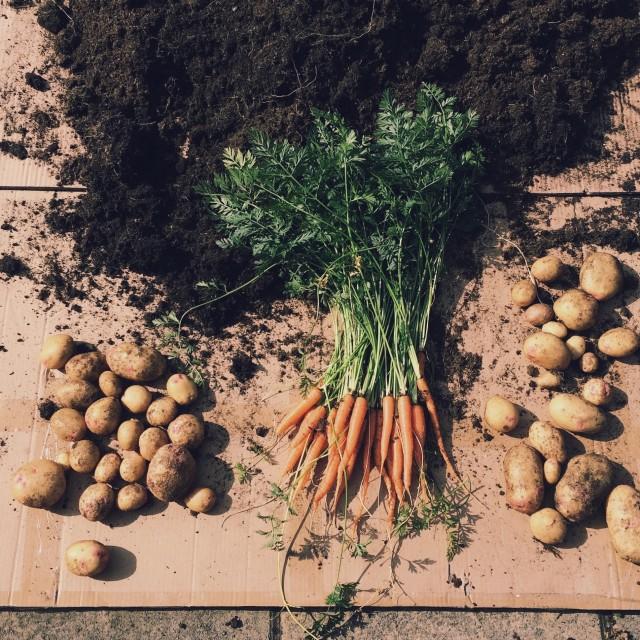 """""""Garden harvest"""" stock image"""