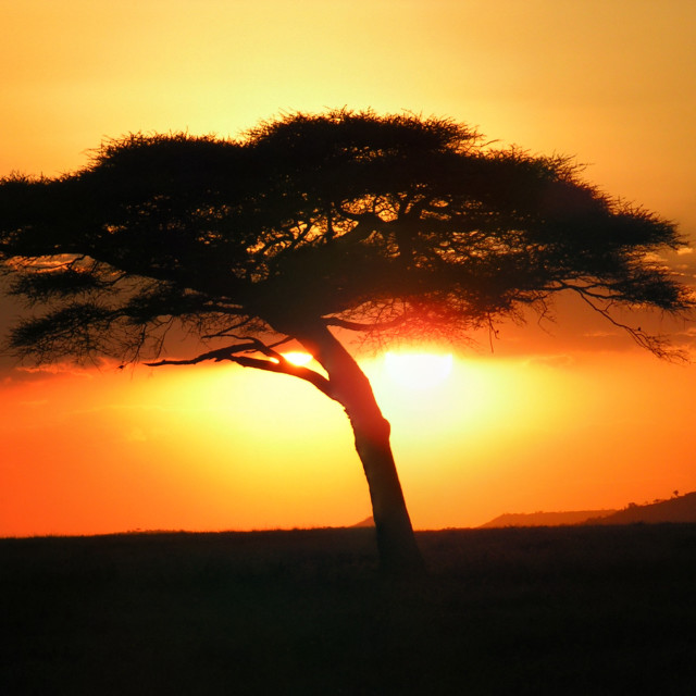 """African Sunset"" stock image"