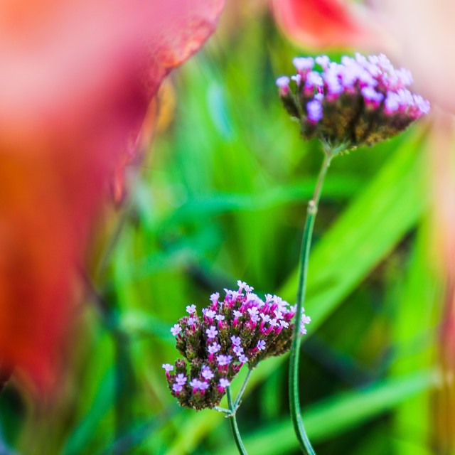 """""""In the bright colored garden"""" stock image"""