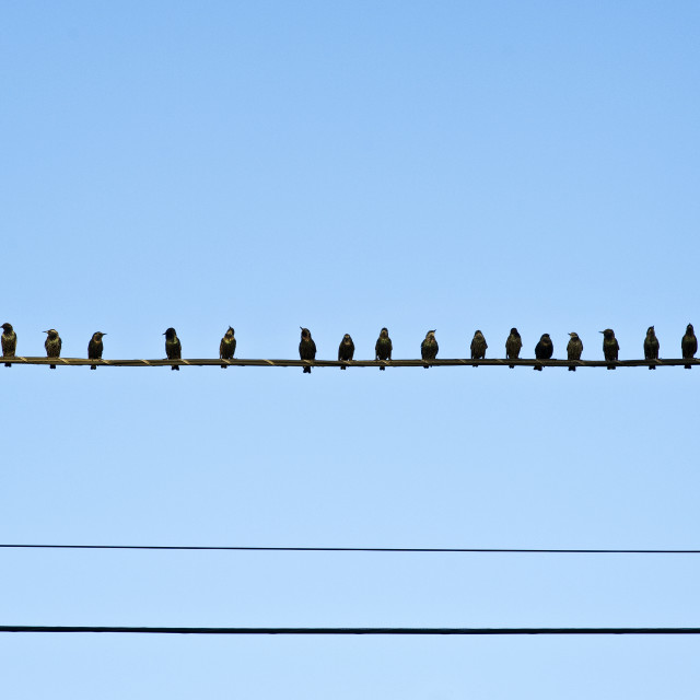 """Birds On wire"" stock image"