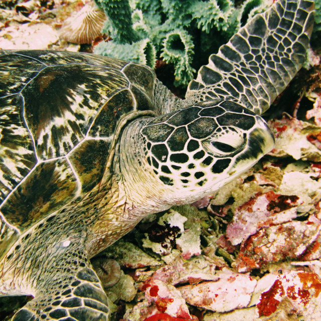 """Turtle Duuuuude"" stock image"