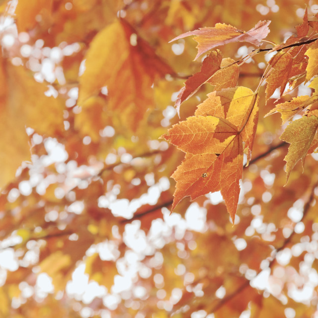 """Fall Foliage"" stock image"
