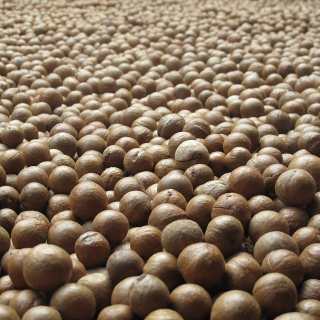 """Macadamia nuts"" stock image"