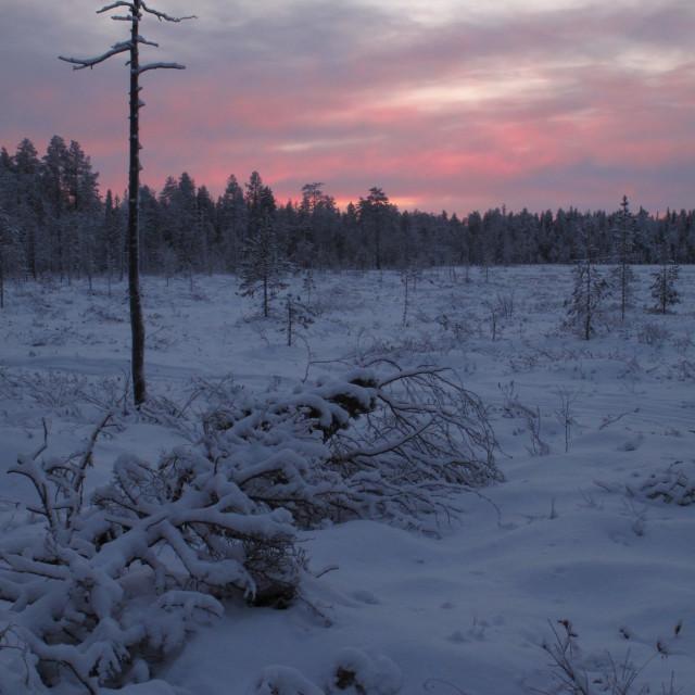 """Finnish Landscape (1)"" stock image"