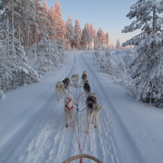 """Husky Dog Sled in Finland"" stock image"