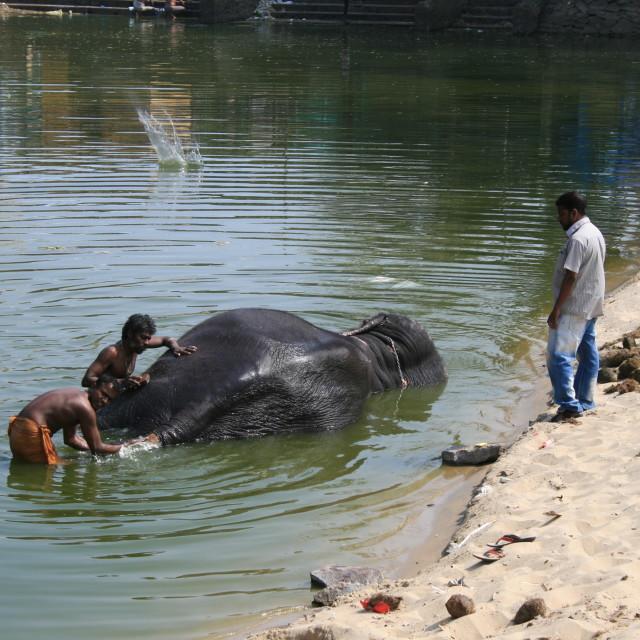 """""""Washing Elephant"""" stock image"""