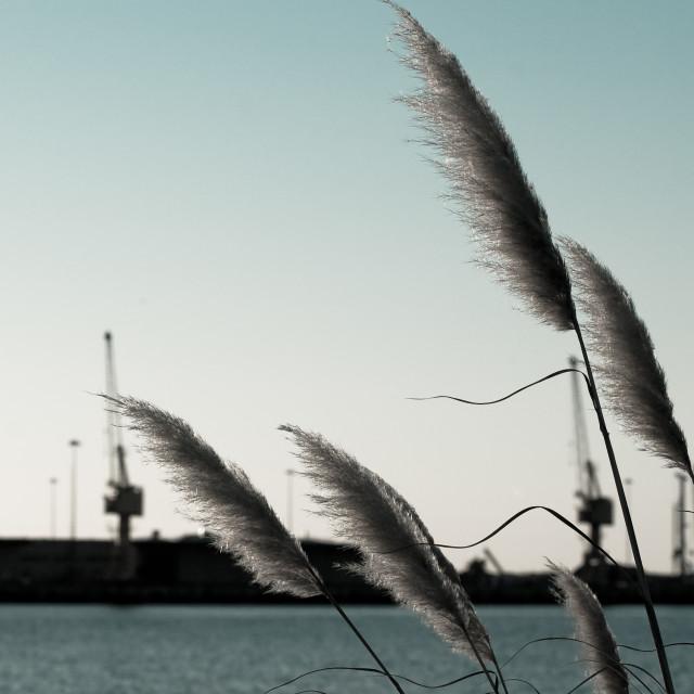 """Port"" stock image"