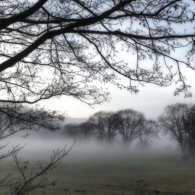 """Fog on the brook"" stock image"
