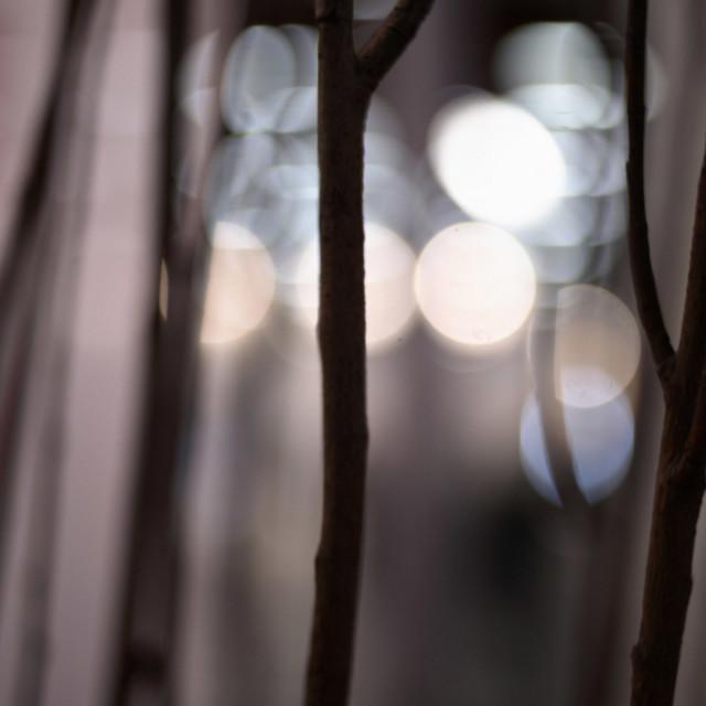 """Abstract art urban night lights nature photo in purple."" stock image"