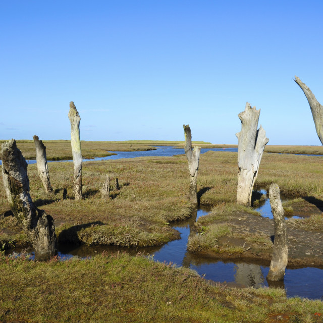 """Weathered Posts, Norfolk"" stock image"