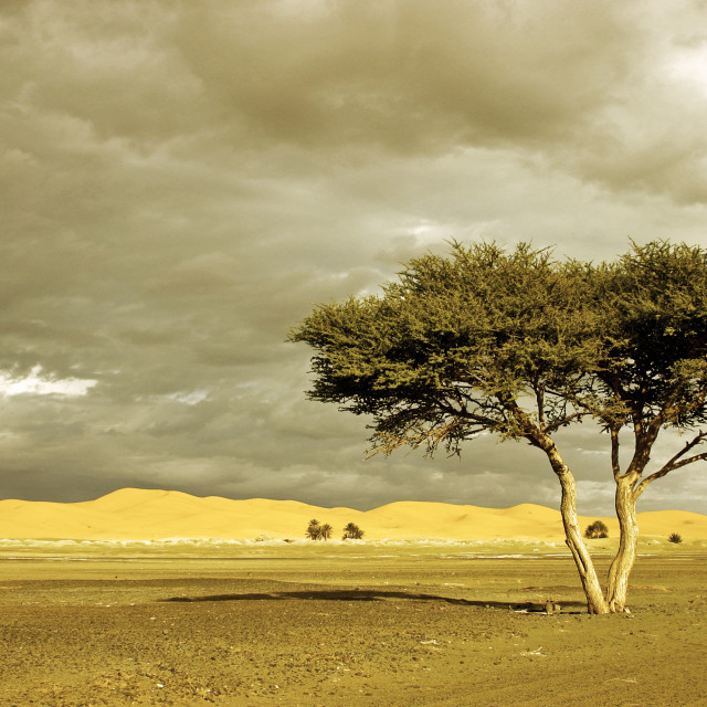 """A Lonely Tree in the Desert"" stock image"