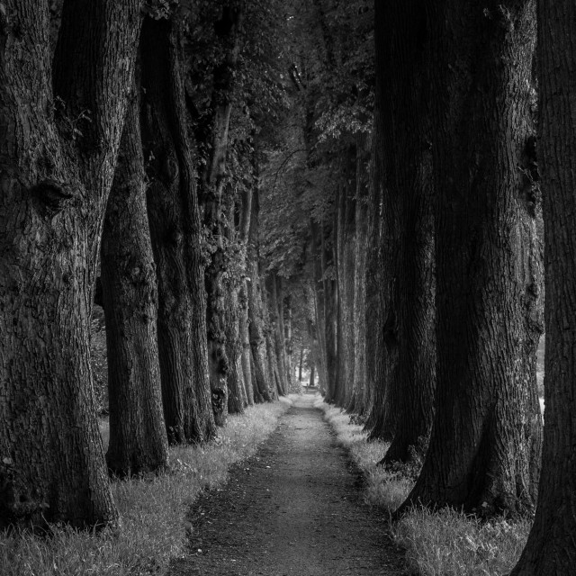"""Avenue of trees."" stock image"