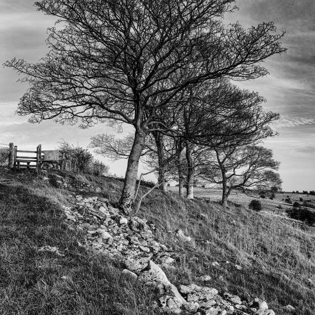 """Mendip trees"" stock image"