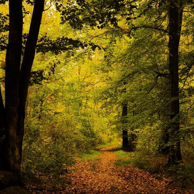 """Autumn foliage"" stock image"