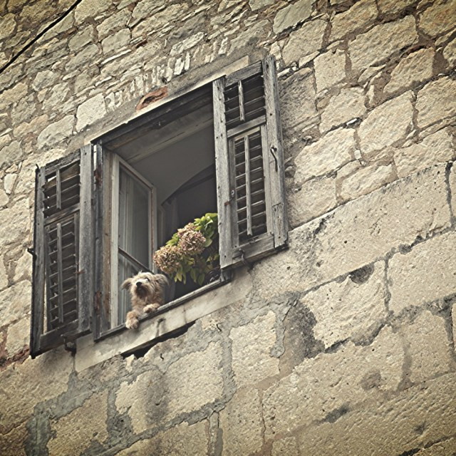 """Dog in the window, Split"" stock image"