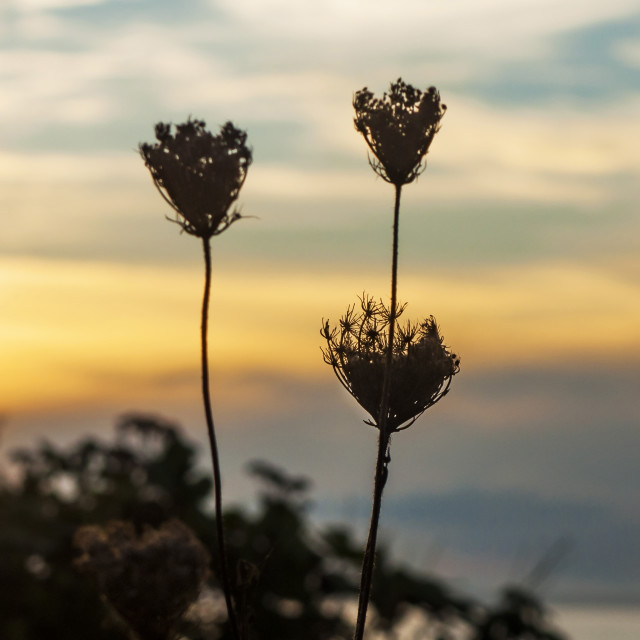 """Autumn Sunset #13"" stock image"