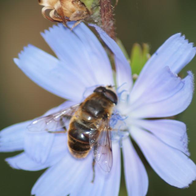 """""""nectar"""" stock image"""