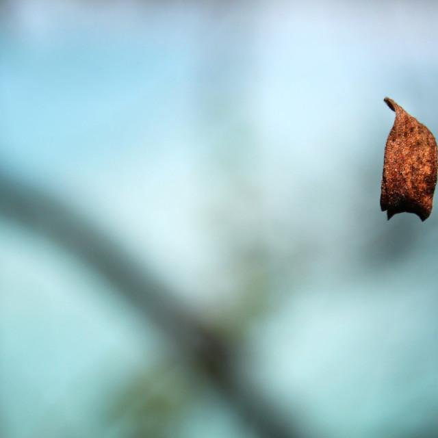 """Magic golden leaf"" stock image"