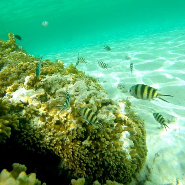 """""""Underwater Life.."""" stock image"""