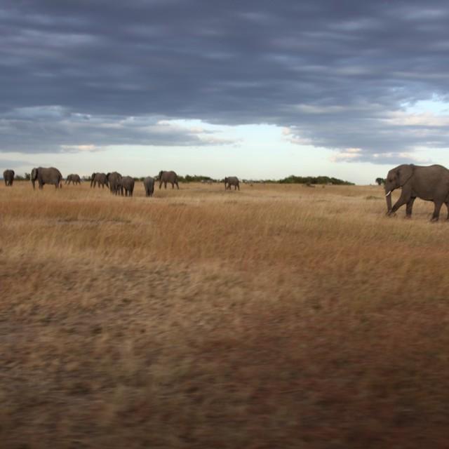 """Elefants"" stock image"