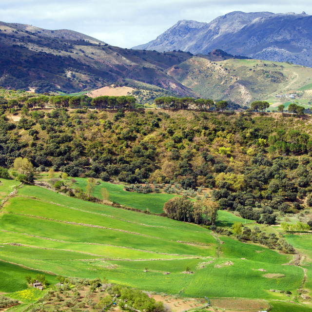"""""""Andalusia Landscape"""" stock image"""