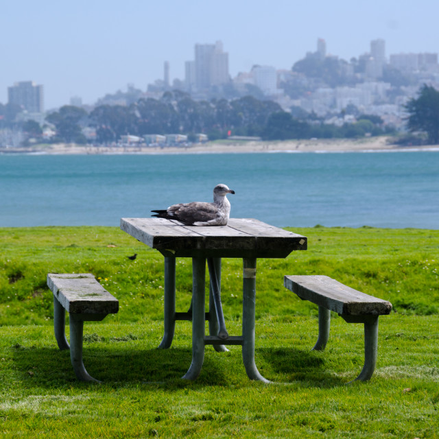 """Seagull picnic"" stock image"