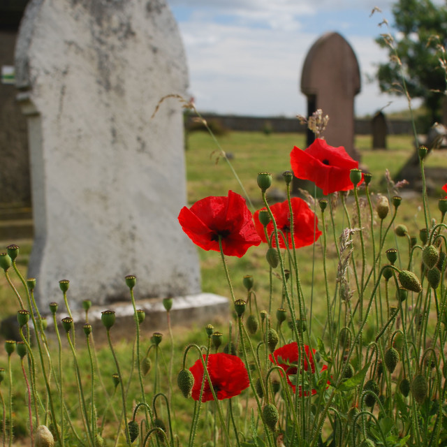 """Red Poppies and Graves"" stock image"