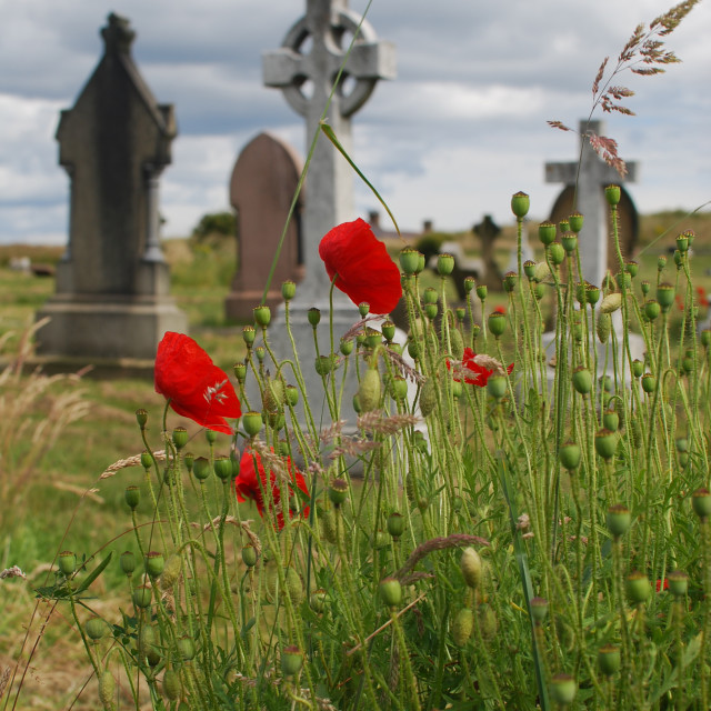 """Poppies in Graveyard"" stock image"