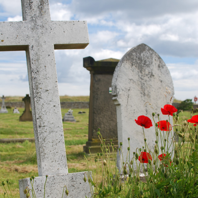 """Graves and Poppies"" stock image"