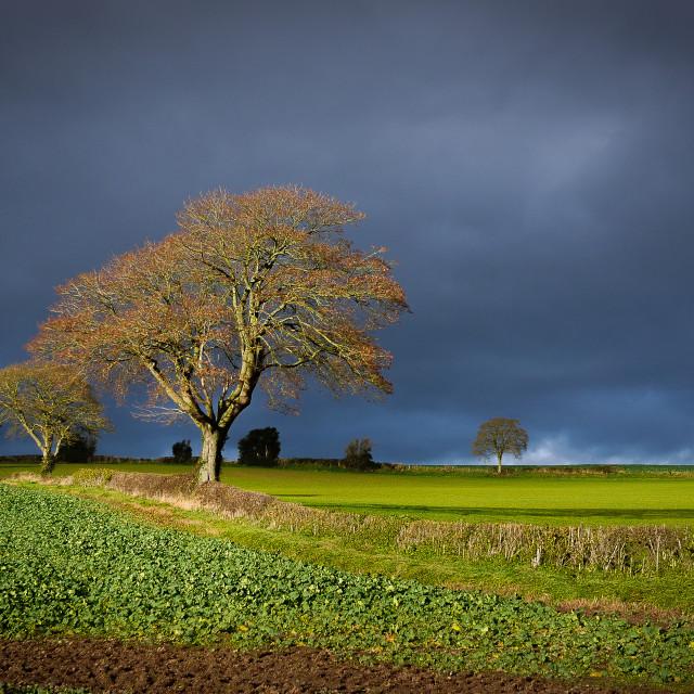 """""""Storm Tree"""" stock image"""