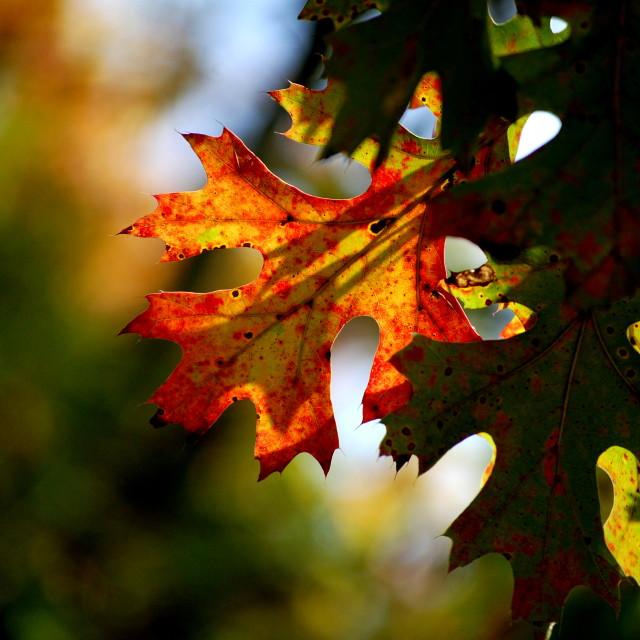 """""""Turning leaf"""" stock image"""