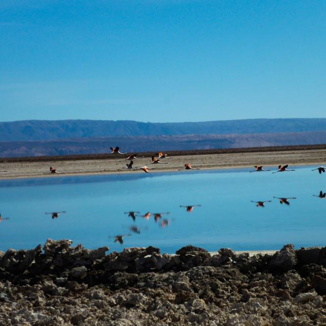 """""""Flamingo Salt Flats"""" stock image"""