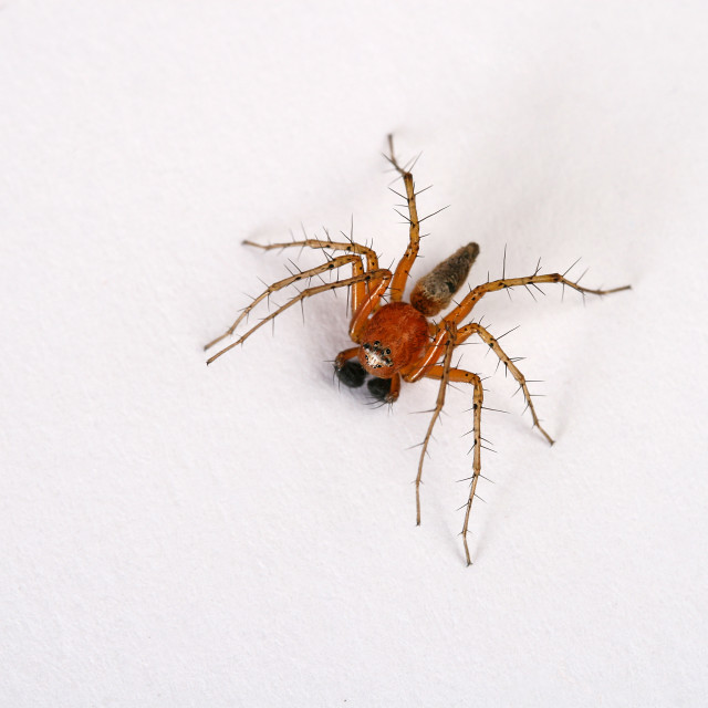 """A top view of a spider"" stock image"