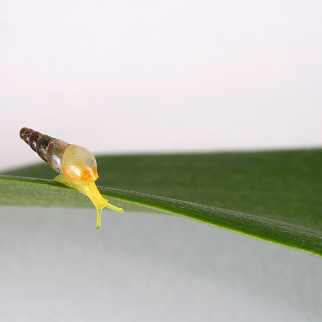 """A small yellow snail"" stock image"
