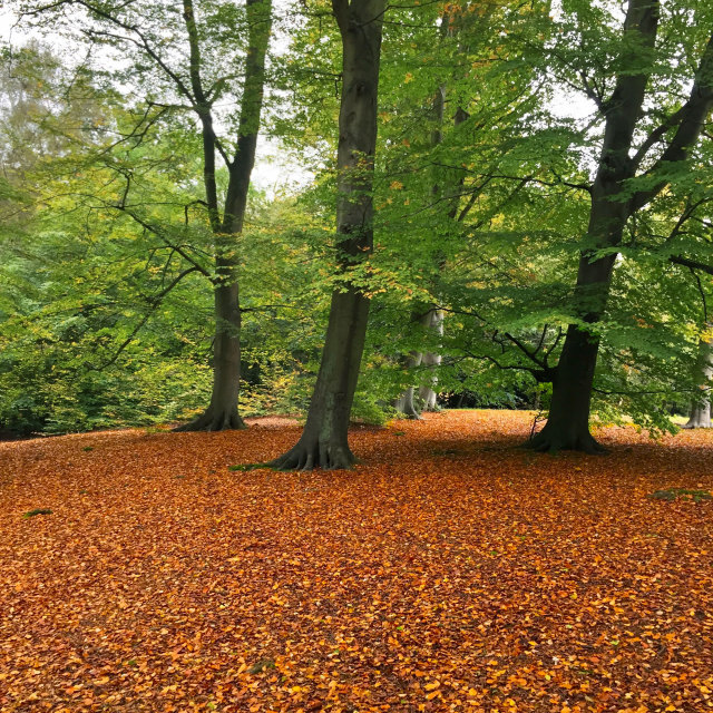 """Autumn woodland scene"" stock image"