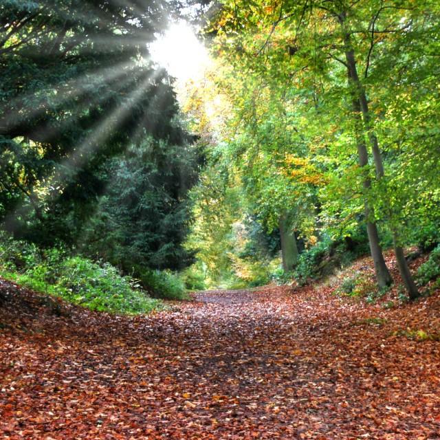"""Autumn scene with sunrays"" stock image"