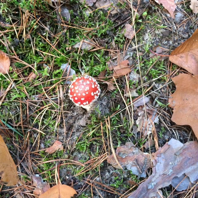 """Toadstool!"" stock image"