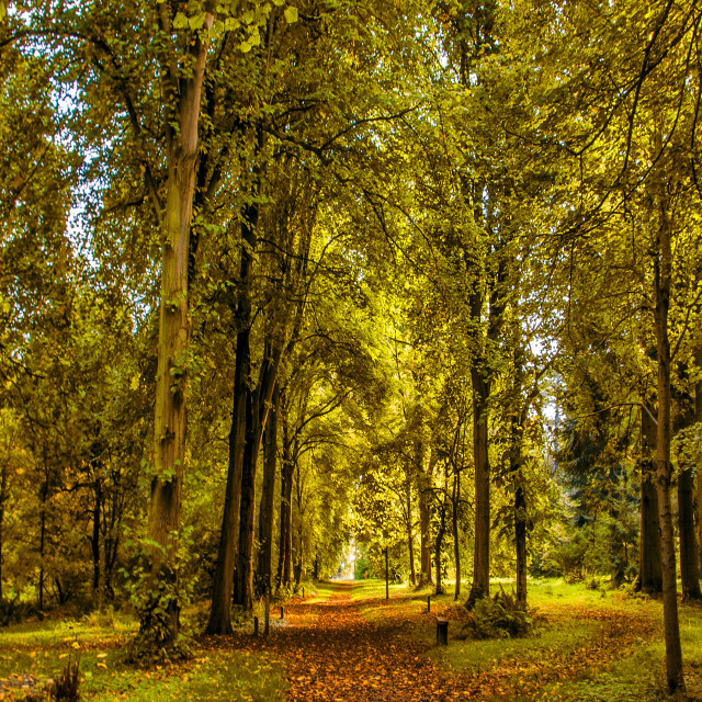 """Woodland Pathway"" stock image"