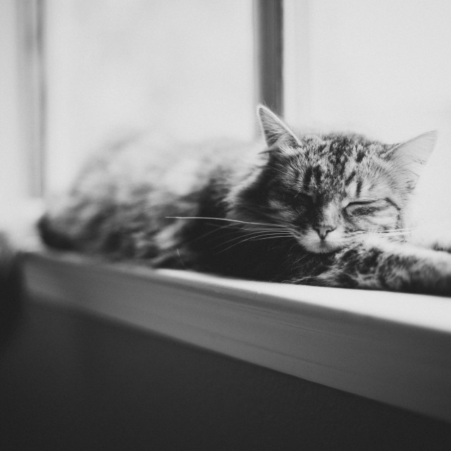 """Sleepy cat"" stock image"