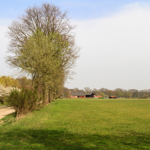 """""""Typical Dutch countryside"""" stock image"""