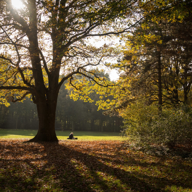 """""""Im Tiergarten"""" stock image"""